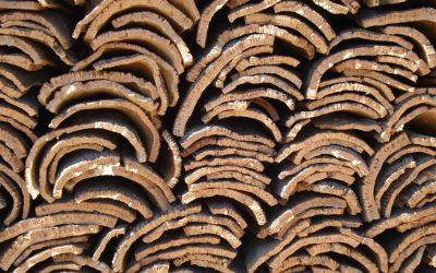 Kork – ein wachsender Bodenbelag